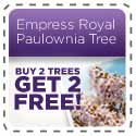 empress royal paulownia tree - world's fastest growing tree