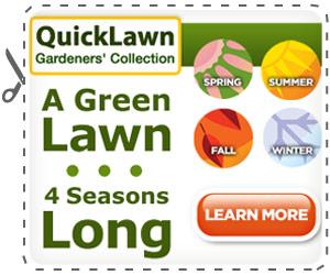 Quicklawn Grass